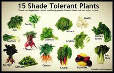 15 plants that are shade tolerant and can grow in areas with more shade.