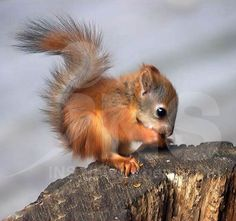 baby squirrel...