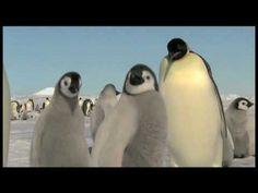 CK Primary - Penguin
