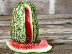 Peacock Striped Watermelon | Baker Creek Heirloom Seed Co
