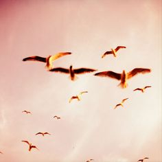a flock flying