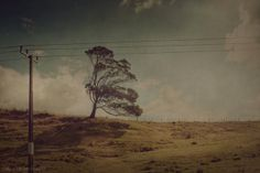 A Memoir of Trees II by cally whitham, via Behance