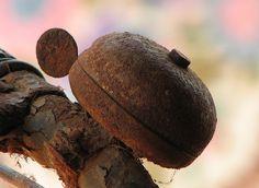 rusted bike bell...