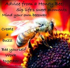Advice from a Honey Bee honey bees