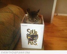 funni cat, anim, funny cats, cat funni, boxes, funny images, funni photo, funny photos, kitti