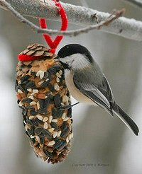 Pinecone bird feeders ~ smear with peanut butter, roll in birdseed and hang with a pipecleaner
