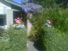 Lovely spring entrance to Sandee and Len McKnight's Palo Alto home.