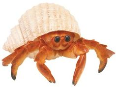Hermit Crab (Incredible Creatures) at theBIGzoo.com, an animal-themed store established in August 2000.
