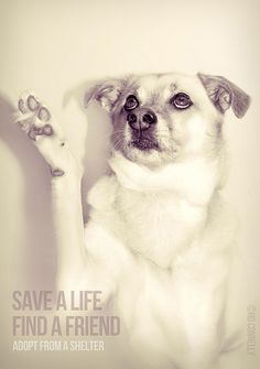 save a life. find a friend. adopt from a shelter.