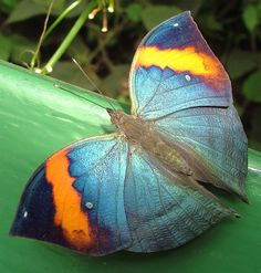 butterfli, nature, colors, art, bug