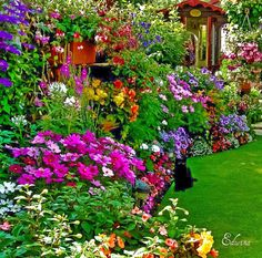 Lush back yard garden with a guardian black cat...
