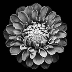 cool black and white flower photo