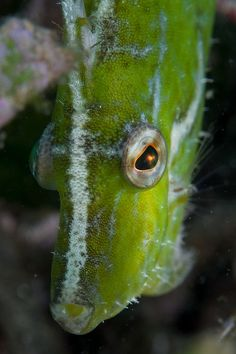 #Filefish #marine #reef