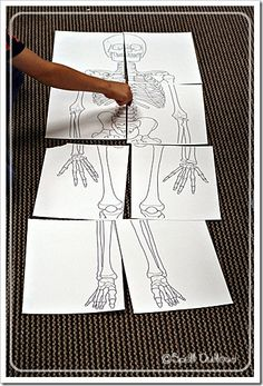 I found this print-out of a toddler skeleton. It is the size of an average toddler so I thought it would be fun to put together.