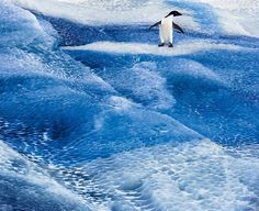 Climate: Will We Lose the Endgame? -  An Adélie penguin on an iceberg in the Ross Sea; photograph by John Weller from his book The Last Ocean: Antarctica's Ross Sea Project, Saving the Most Pristine Ecosystem on Earth. It includes a foreword by Carl Safina and is published by Rizzoli.