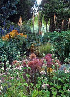 Wonderful garden with beautiful bloom of eremurus. Linda Cochran Garden