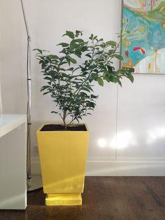 Moth Design: Painted Planter + Lemon Tree Tutorial
