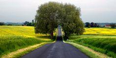 Camino entre arboles