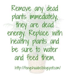 Removing Dead Leaves From Plants Will Also Remove Negative