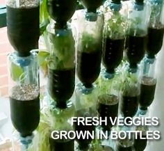 Recycle plastic soda bottles by turning them into a great fresh herb and veggie garden. Perfect for small yards, balconies, or even indoors (kitchen window garden?)
