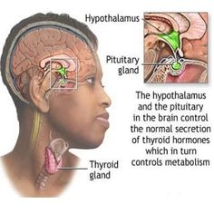 Natural Cures For Underactive Thyroid