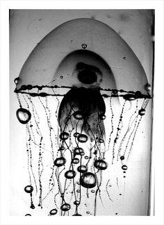 Porcupine Jellyfish by SquirrelPhoto