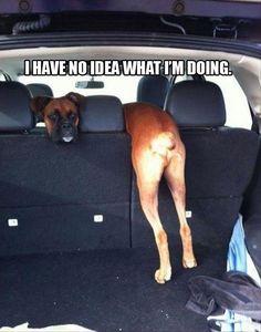 Neither do I! #dogs #pets #Boxers Facebook.com/sodoggonefunny