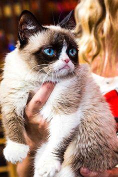 Grumpy cat photo