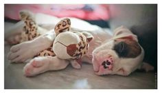 anim, boxer boxer, doggi, babi hope, boxer dog, cudd boxer, boxers, puppi, boxer babi