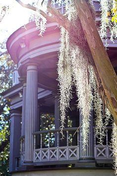 Love how the Spanish Moss frames this Savannah home!