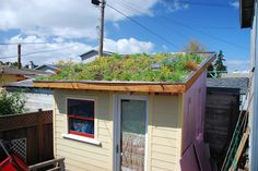 Tiny Backyard House: Green roof in bloom