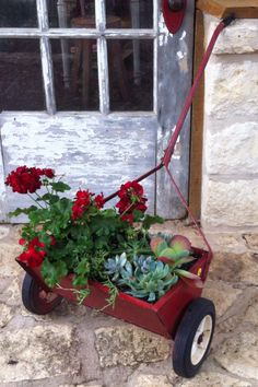 Vintage seed spreader geraniums and succulents