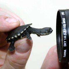 Seriously rare and supercute tiny turtles surprise zookeepers
