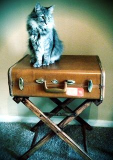 vintage suitcase into a table diy Obsessive and Creative