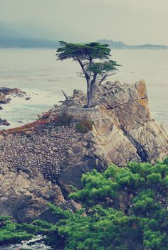 The Lone Cypress, 17
