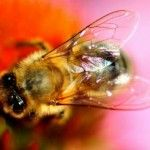 Are Honeybee Products Healthy?