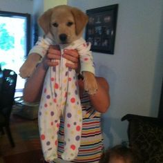 A puppy in footy pajamas. o.O