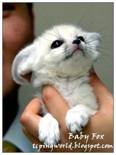 Peary Land: Cute Animal Babies!!