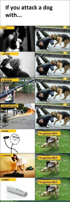 If you attack a dog...