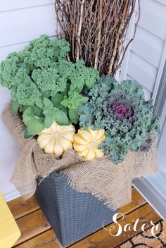 Fall Front Porch Planter with Ornamental Kale, Autumn Sedum and Gourds