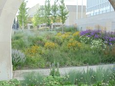 A contemporary perennial garden at the Art Institute in Chicago, IL  designed by Roy Diblik, co-owner of Northwind Perennial Farm in Burlington, WI.