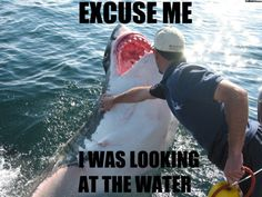WHAT? Who touches a great white shark?