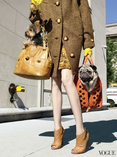 A pug and tote in Vogue, October 2008, photographed by Raymond Meier.
