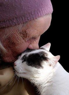 Touching...... crazy cats, kiss, kitty cats, funny cats, pet, special friends, crazy cat lady, old ladies, cat memes