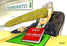 Les OGM sans danger !