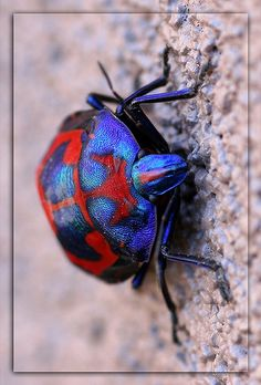 Bug Fashionista! by lindys_images, via Flickr