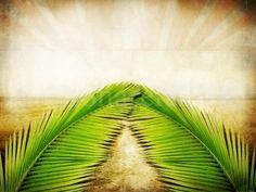 happi palm, easter, beauti palm, palm sunday, palms