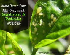How+to+Make+Your+Own+All-Natural+Insecticides+and+Pesticides