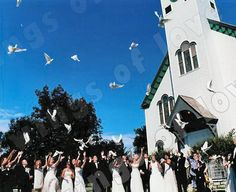 wedding dove release... yes please!