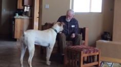 What Happens When a Man with Alzheimer's is with his Dog | WOOFipedia, provided by the American Kennel Club